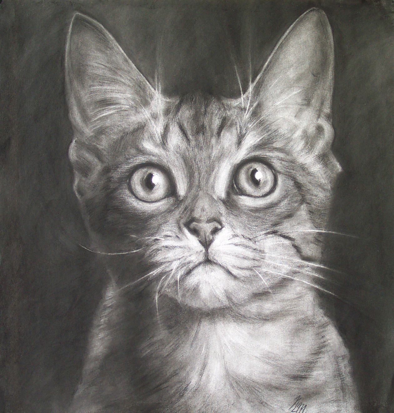 Charcoal drawing by Jim Montgomery Califonia Spangled Tabby