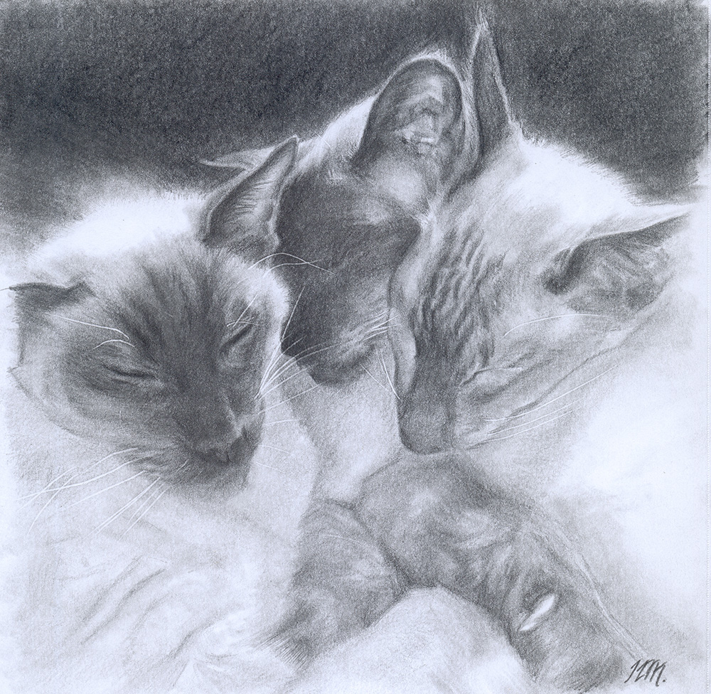 Cat Trio, Pencil drawing, private commisson