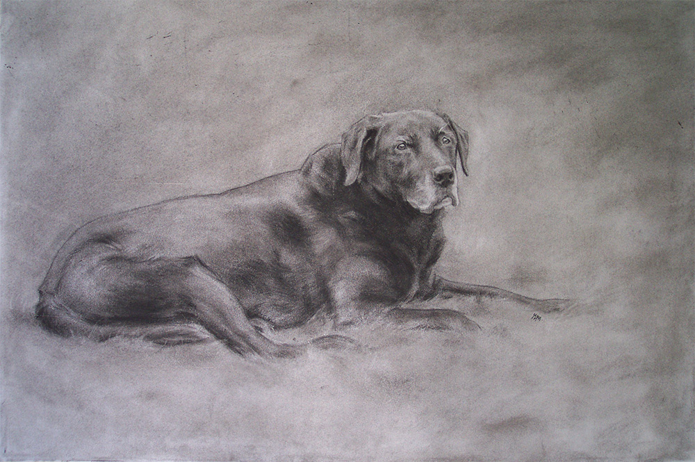 'Kato', 297 x 420 mm, Charcoal drawing, private commission