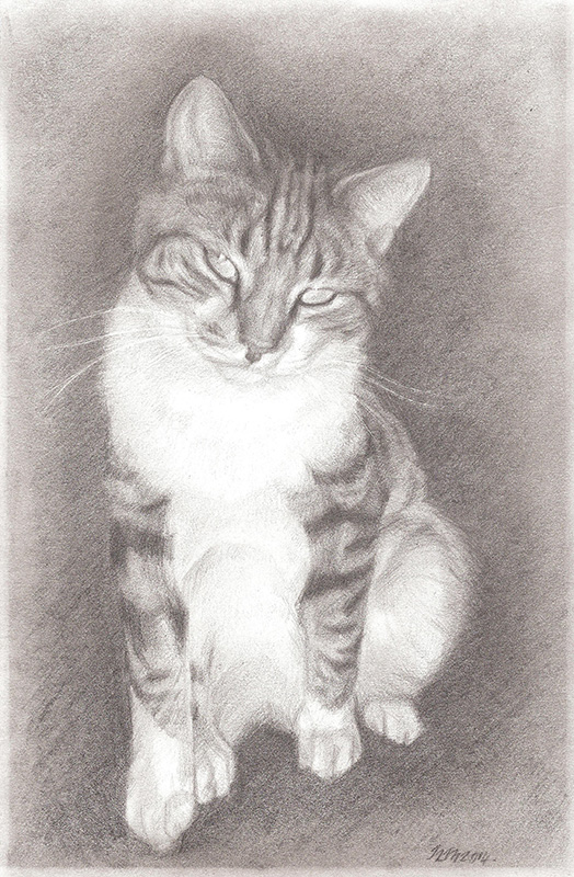 tabby cat private commission